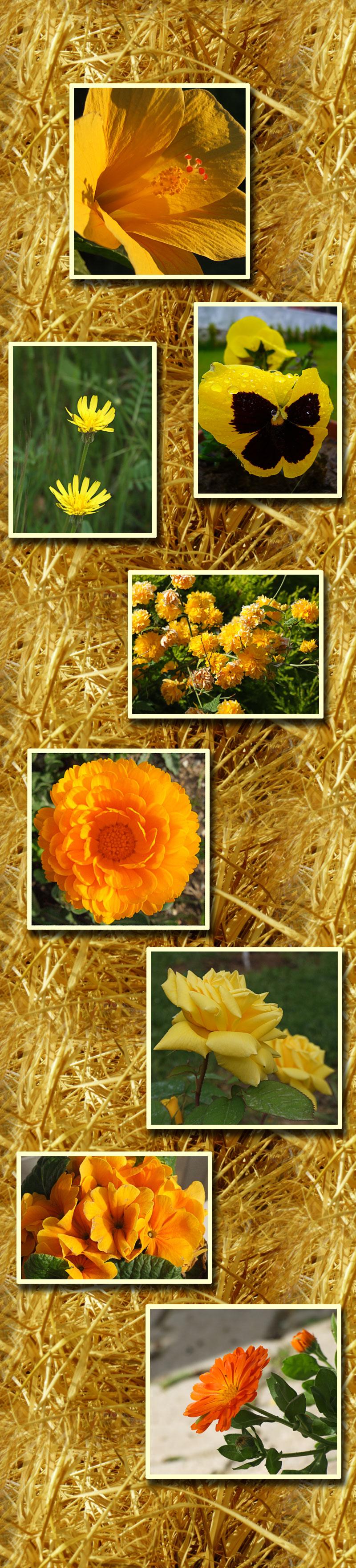 Rhapsodie en jaune
