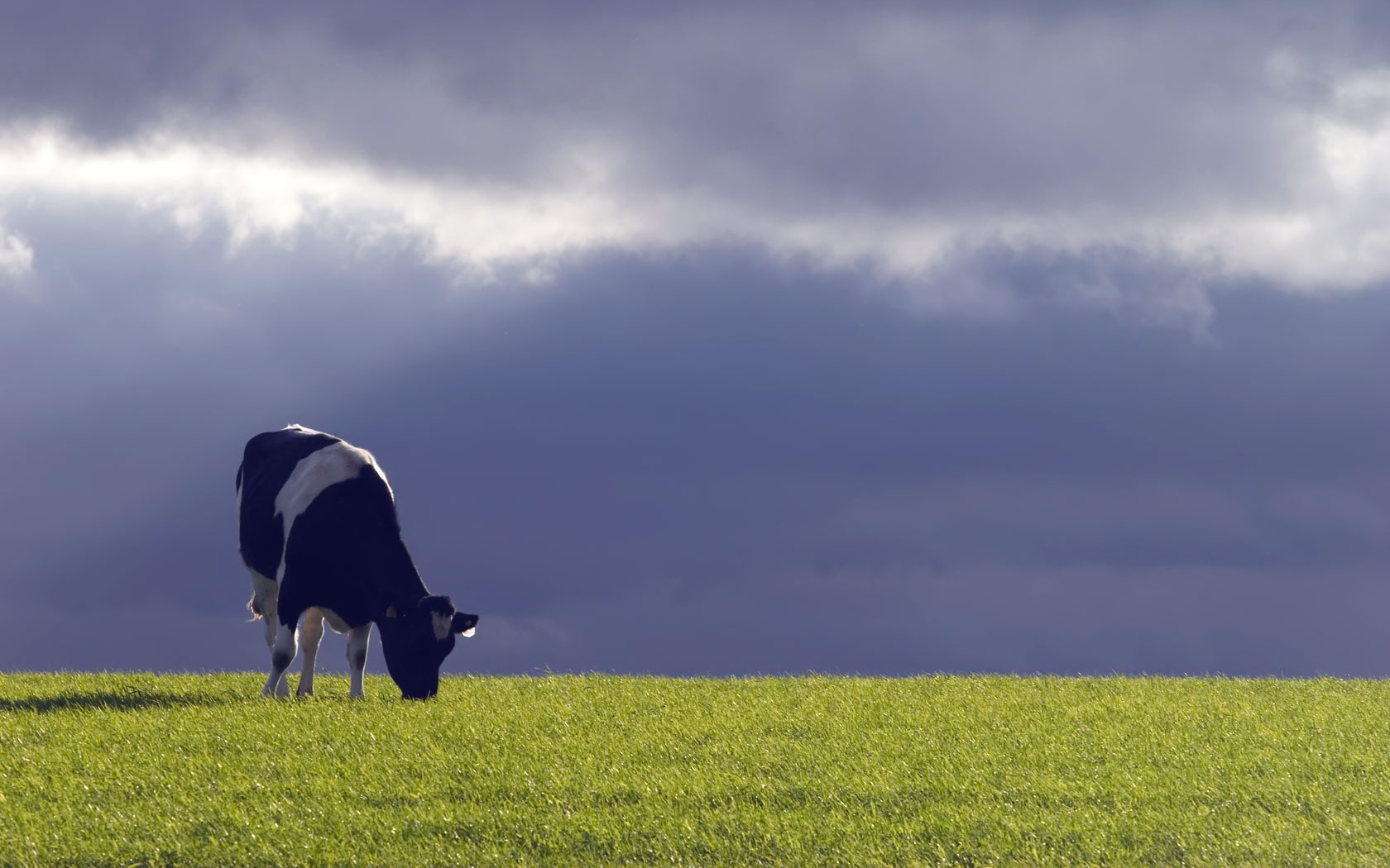 http://sd-1.archive-host.com/membres/images/209526371319110277/cow-stormy-sky.jpg