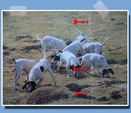 http://sd-1.archive-host.com/membres/images/352027829/apresmeute.jpg