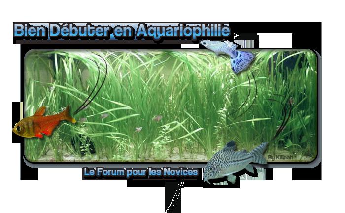 Bien Débuter En Aquariophilie - BDEA - Forum débutant