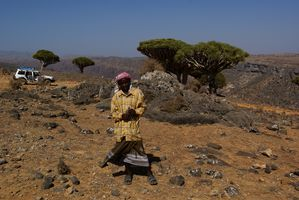 guide socotra