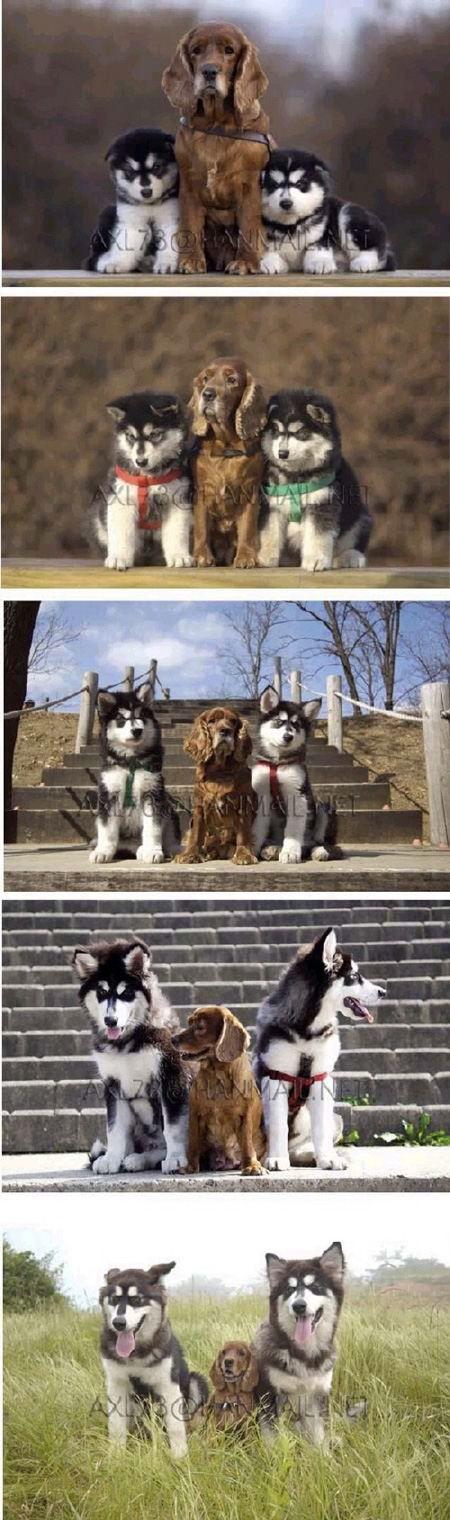 le temps passe chien