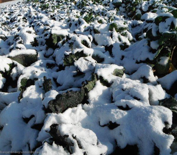 http://sd-1.archive-host.com/membres/images/83700288762628507/2011/novembre_decembre/600milanmarq.jpg