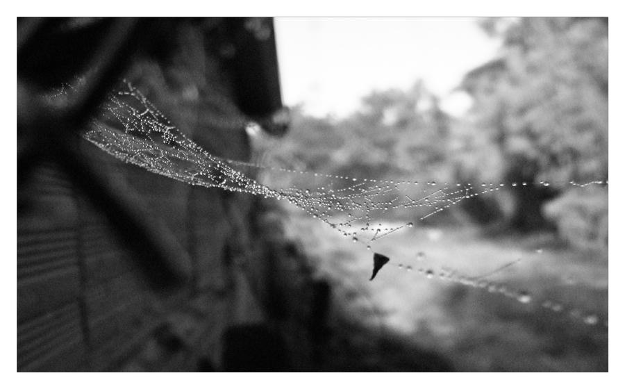 toile d' araignée emperlée de pluie