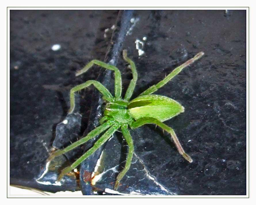 araigée verte sur porte noire
