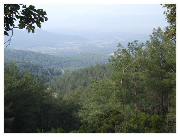 montagnes couvertes de sapins