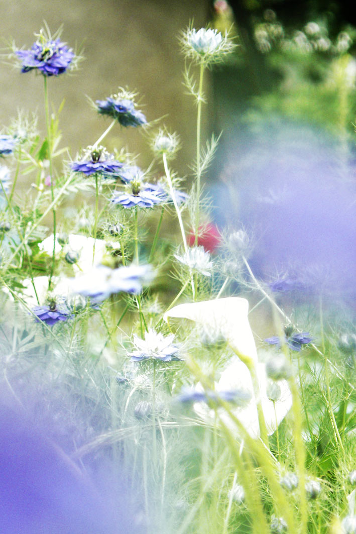 bleu1_105.jpg