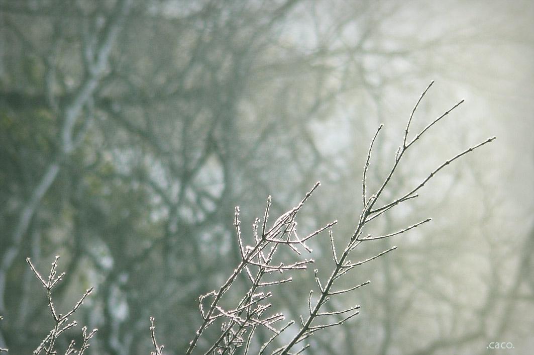 hiver1web.jpg
