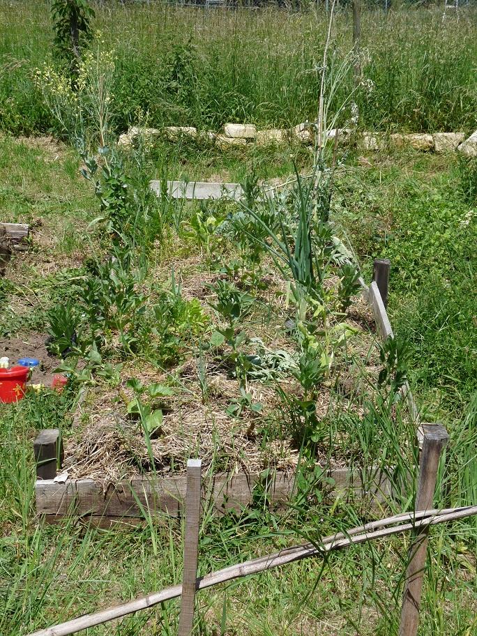 Mes essais en Permaculture P1030133