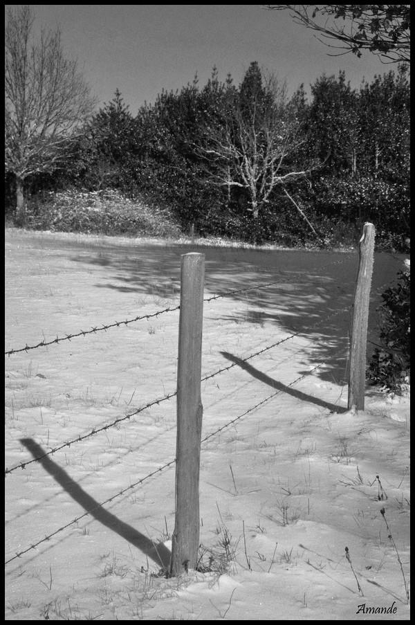 Dimanche 5 Décembre - Noir et Blanc Noir_et_blanc_neige